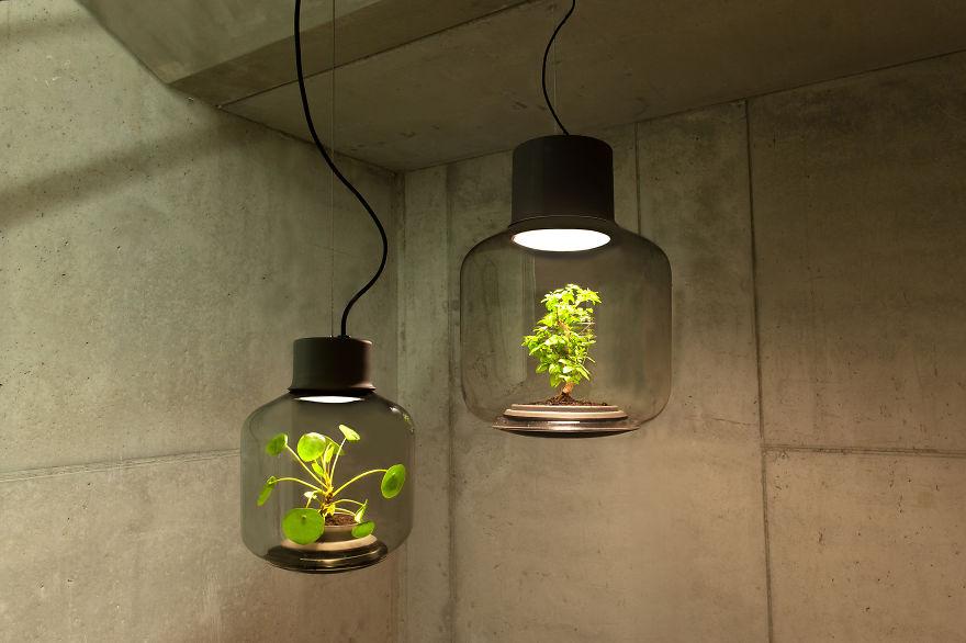 lampade-fanno-crescere-piante-6