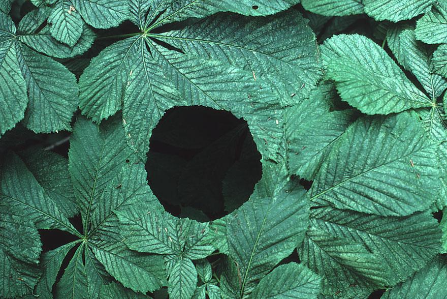 land-art-installazioni-natura-andy-goldsworthy-03