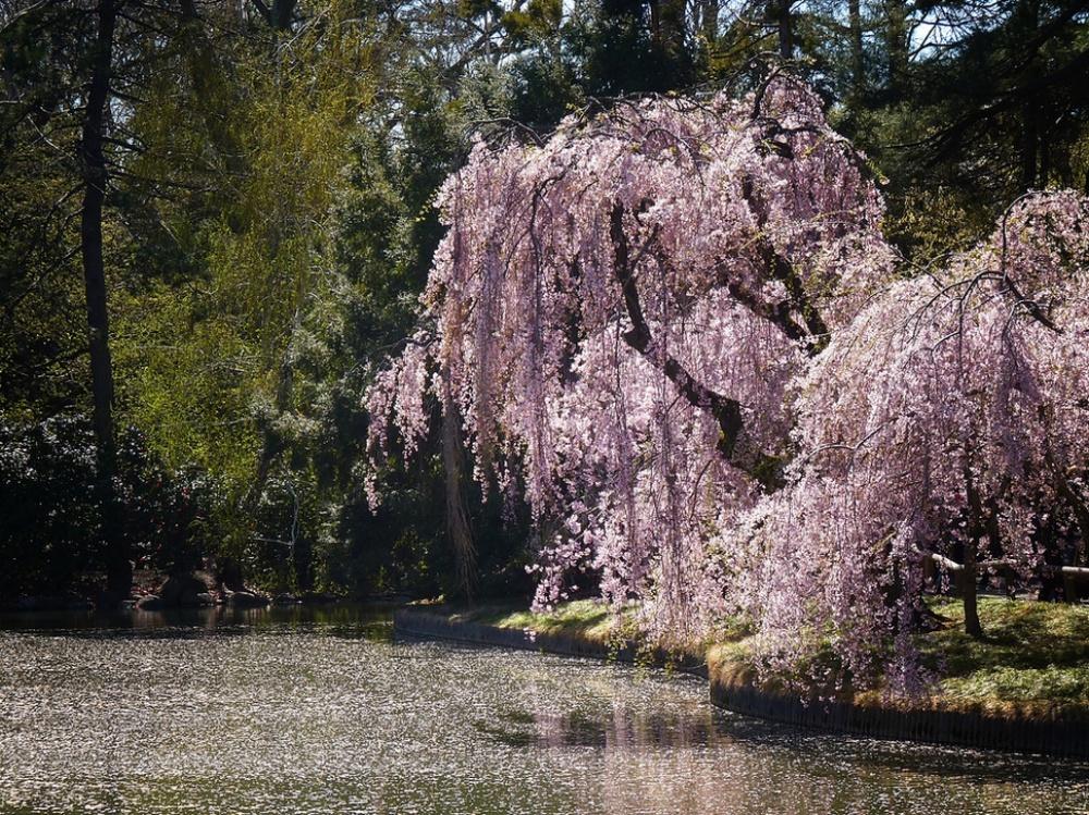 25 Posti Nel Mondo Che Diventano Incredibili Giardini