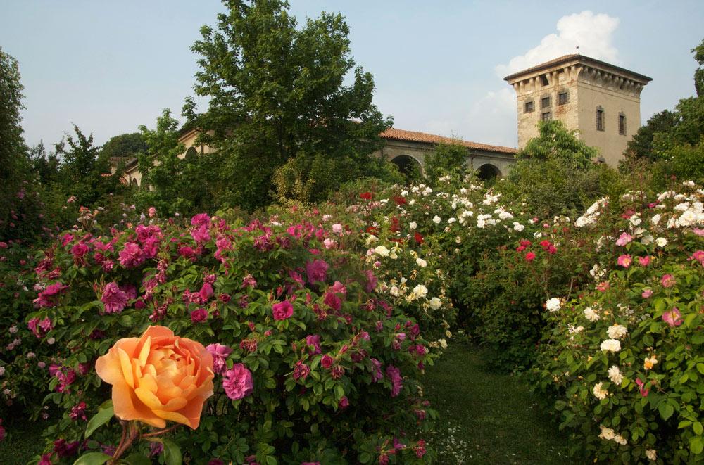 25 posti nel mondo che diventano incredibili giardini for Cespugli fioriti da giardino