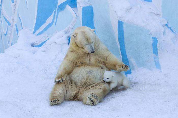 mamma-orso-gioca-con-cucciolo-neve-prima-volta-2