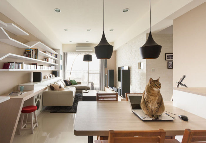 percorsi-gatto-mensole-libreria-passerella-thinking-design-4