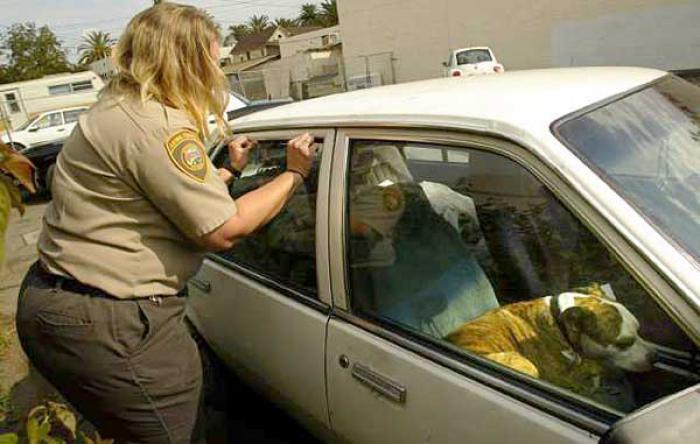 rompere-vetro-auto-salvare-cane-caldo-florida-legge-1