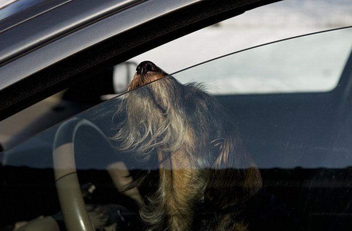 rompere-vetro-auto-salvare-cane-caldo-florida-legge-4