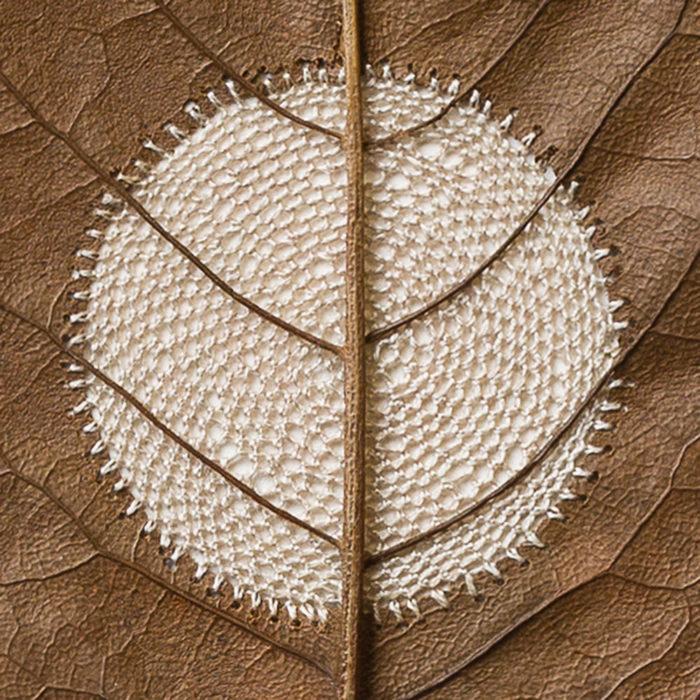 sculture-foglie-secche-uncinetto-filo-susanna-bauer-09