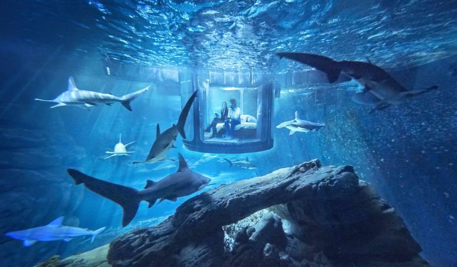 airbnb-affitta-camera-acquario-squali-parigi-2