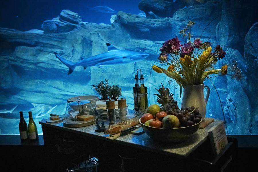 airbnb-affitta-camera-acquario-squali-parigi-6