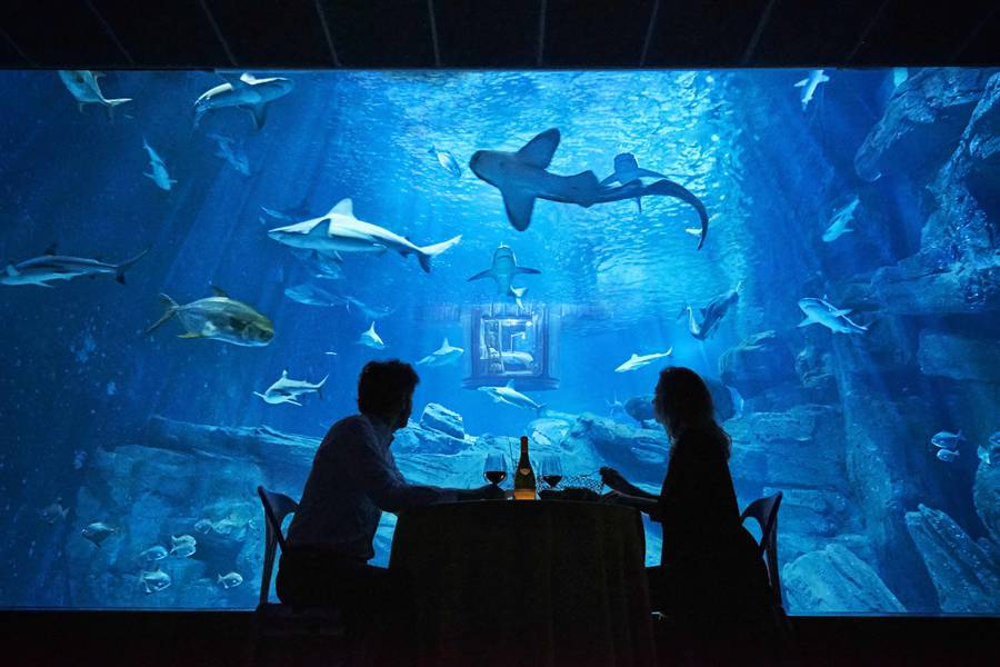 airbnb-affitta-camera-acquario-squali-parigi-7