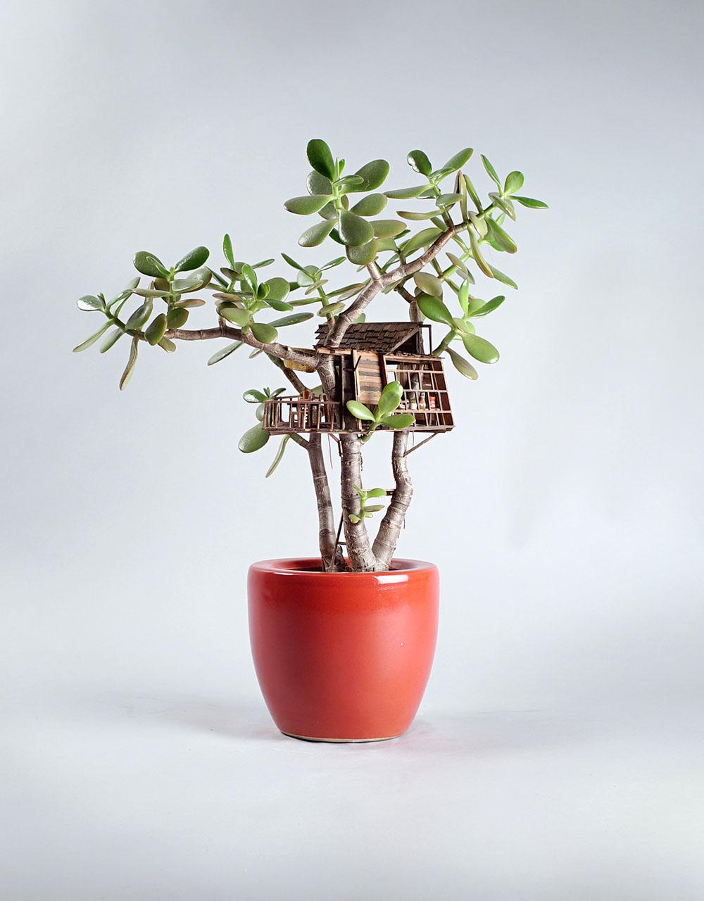 Case sull 39 albero in miniatura costruite su piante d for Case costruite su pendii