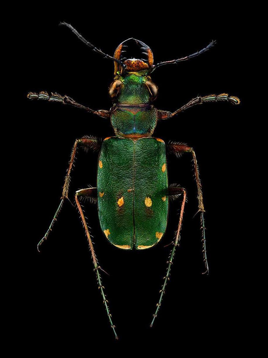 foto-macro-insetti-levon-biss-01