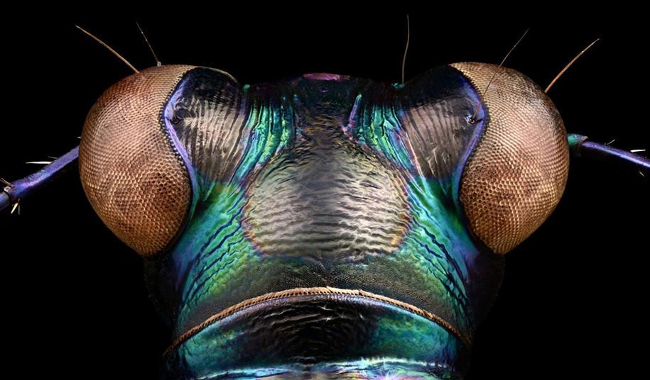 foto-macro-insetti-levon-biss-03