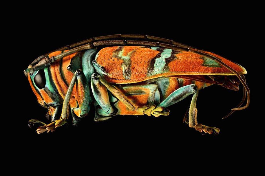 foto-macro-insetti-levon-biss-06