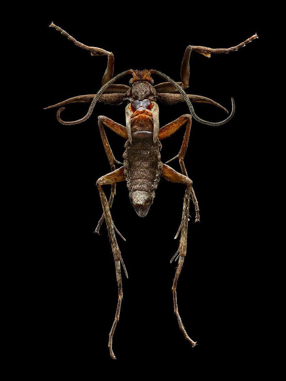 foto-macro-insetti-levon-biss-07