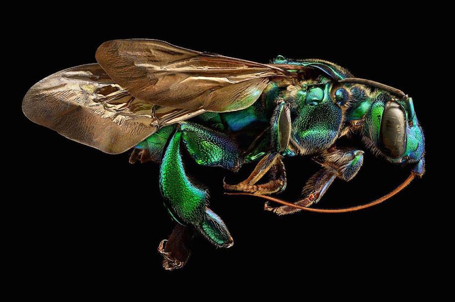 foto-macro-insetti-levon-biss-08