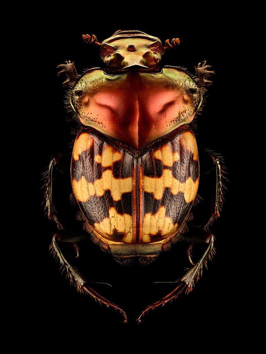 foto-macro-insetti-levon-biss-09