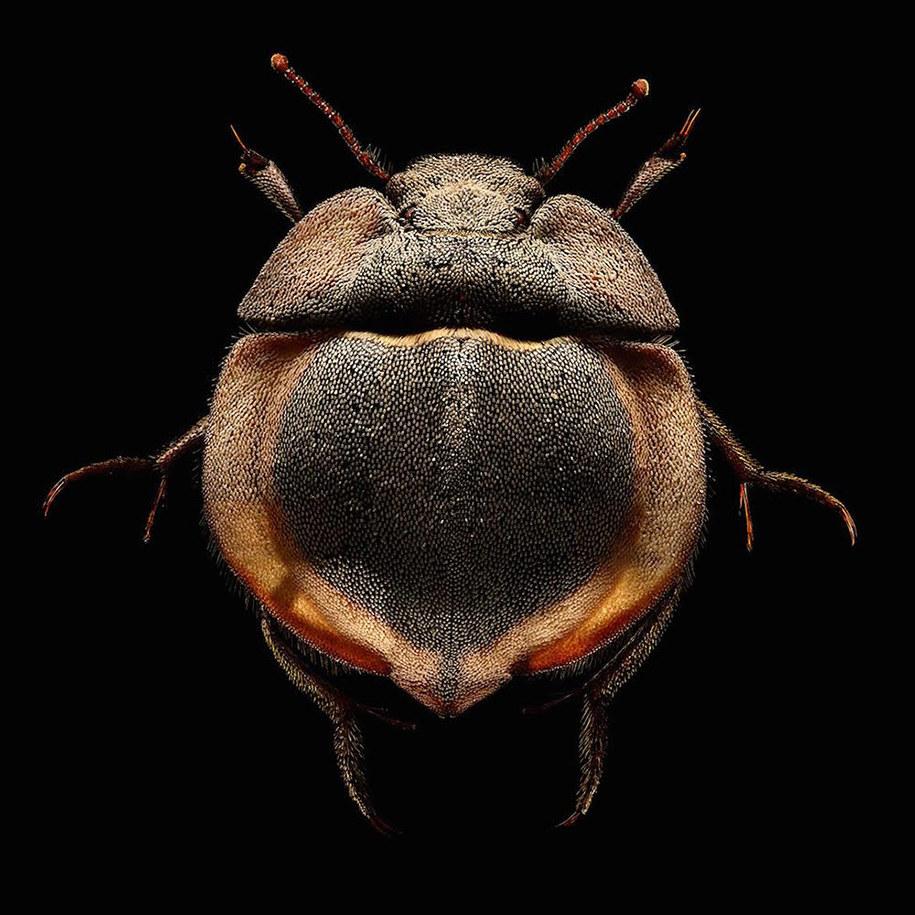 foto-macro-insetti-levon-biss-11