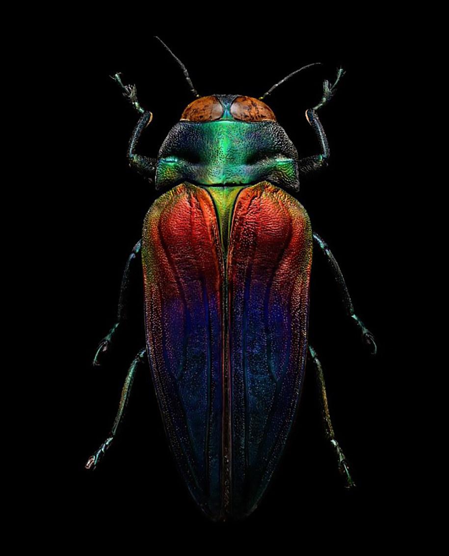foto-macro-insetti-levon-biss-12