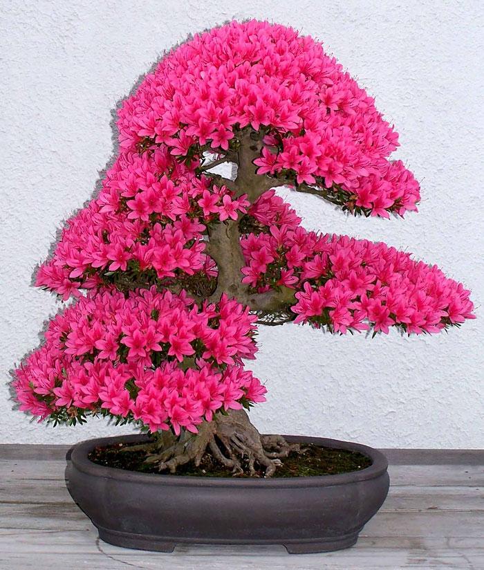 immagini-incantevoli-bonsai-02