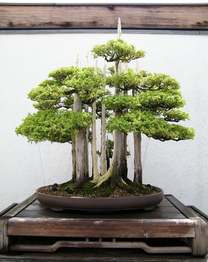 immagini-incantevoli-bonsai-06