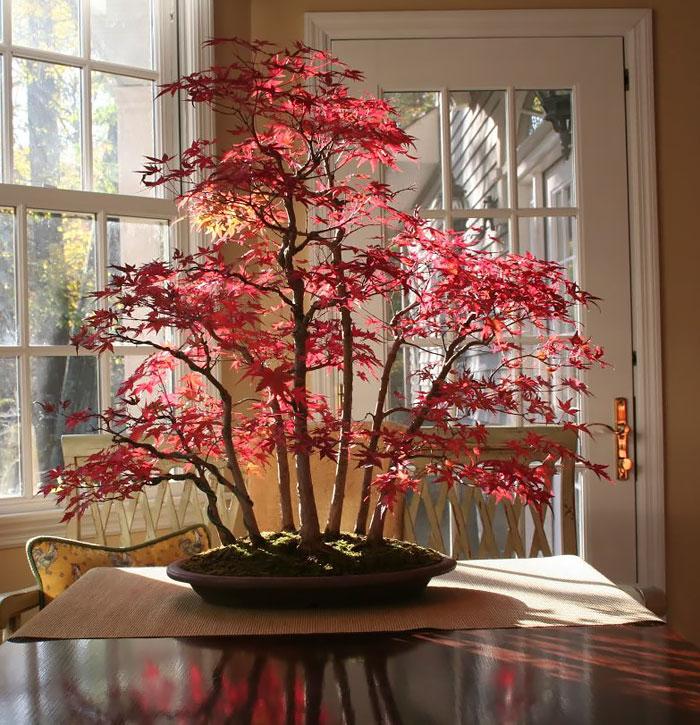 immagini-incantevoli-bonsai-08