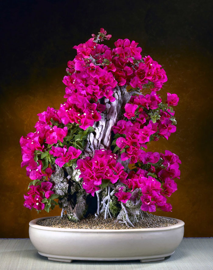 immagini-incantevoli-bonsai-09