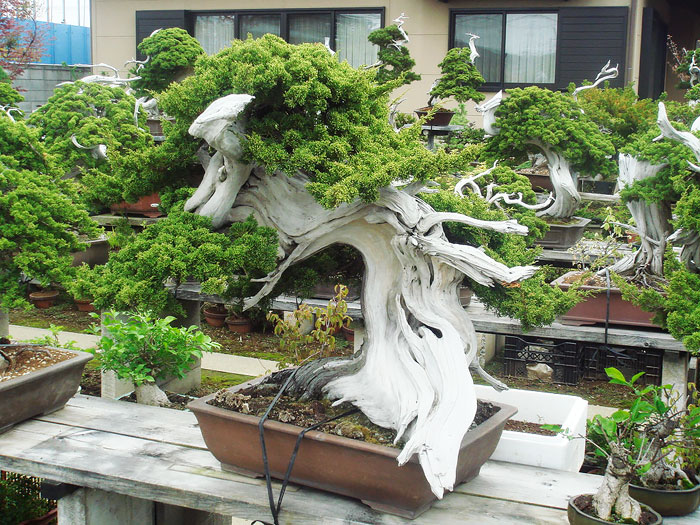 immagini-incantevoli-bonsai-12