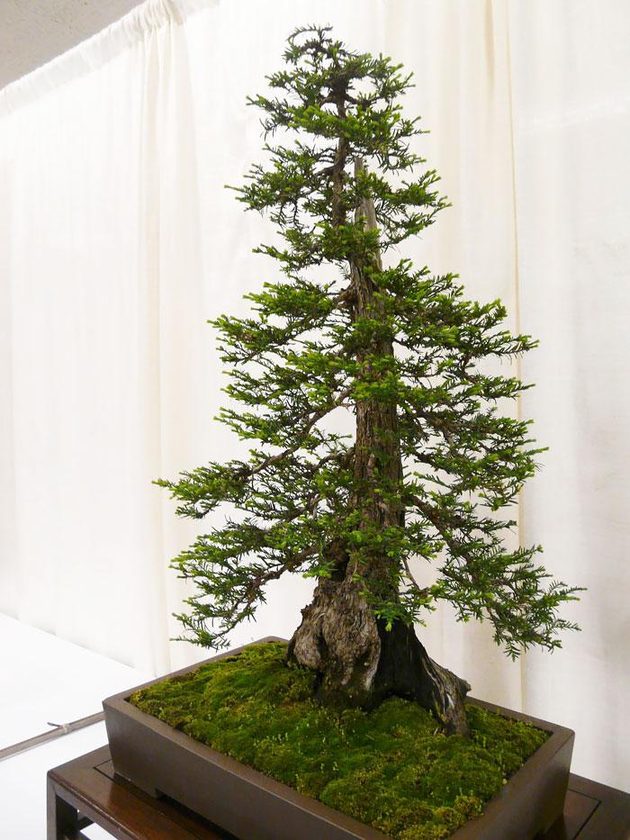 immagini-incantevoli-bonsai-15