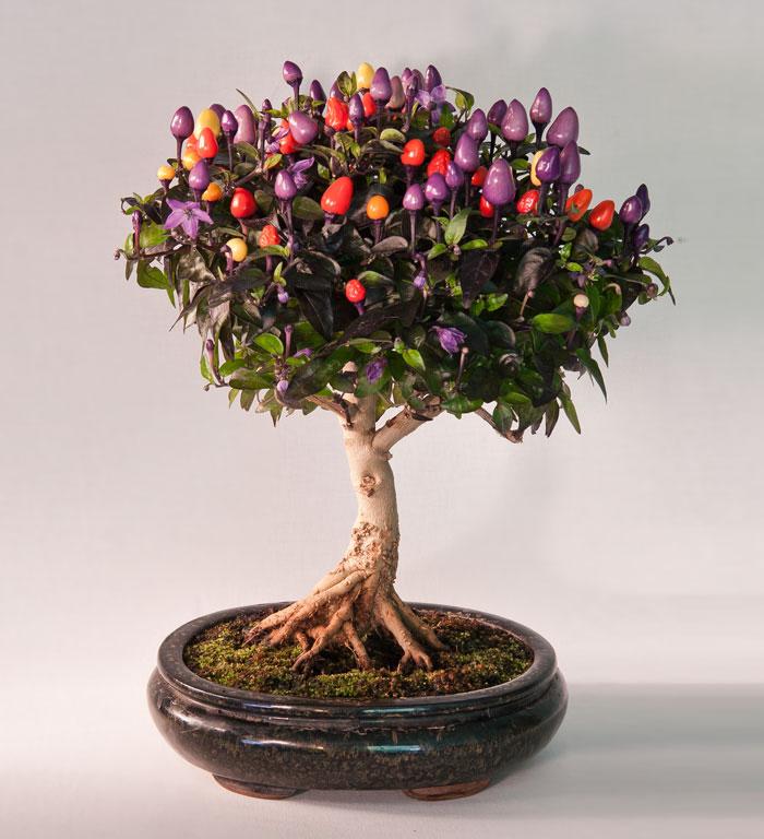 immagini-incantevoli-bonsai-17