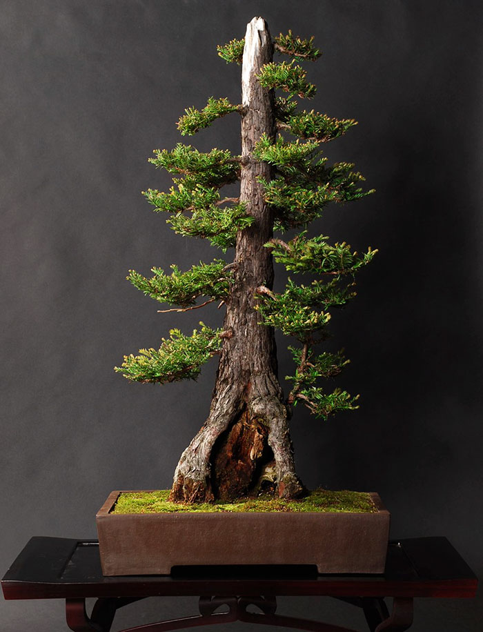 immagini-incantevoli-bonsai-25