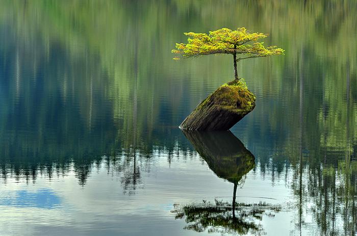 immagini-incantevoli-bonsai-27