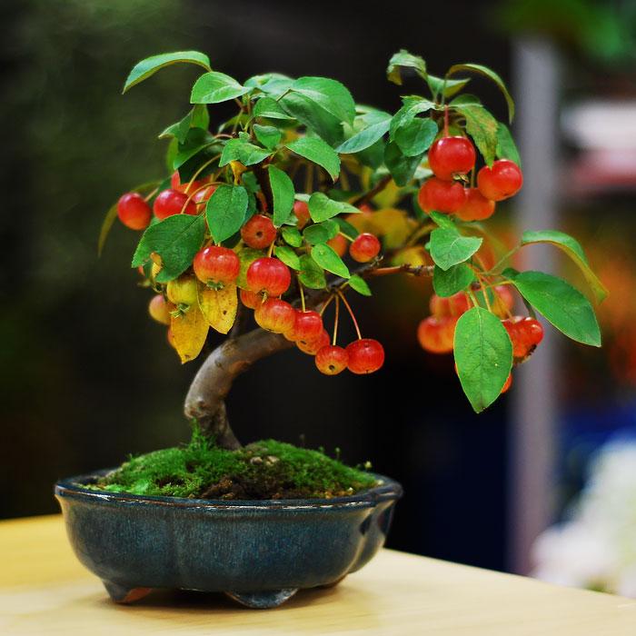immagini-incantevoli-bonsai-30