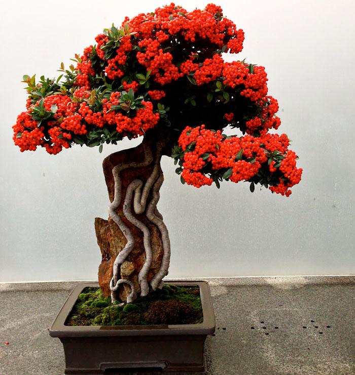 immagini-incantevoli-bonsai-32