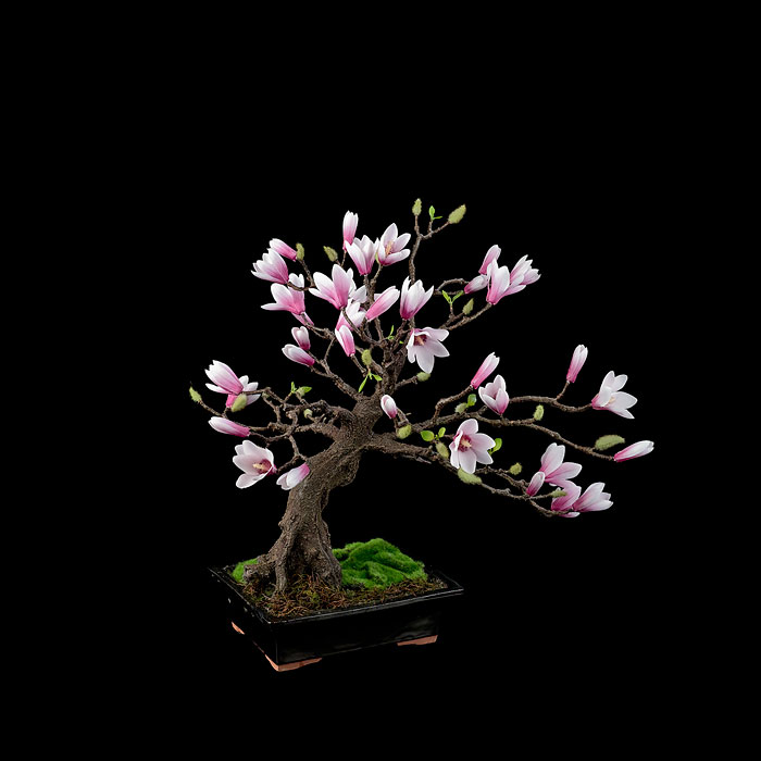 immagini-incantevoli-bonsai-33