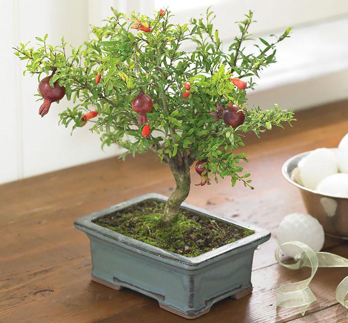 immagini-incantevoli-bonsai-35