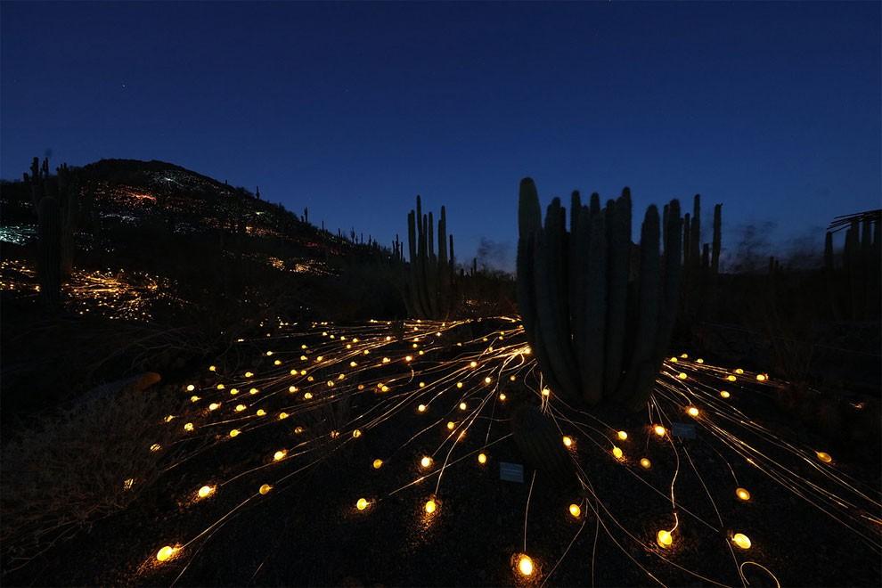 installazione-luci-deserto-arte-bruce-munro-13