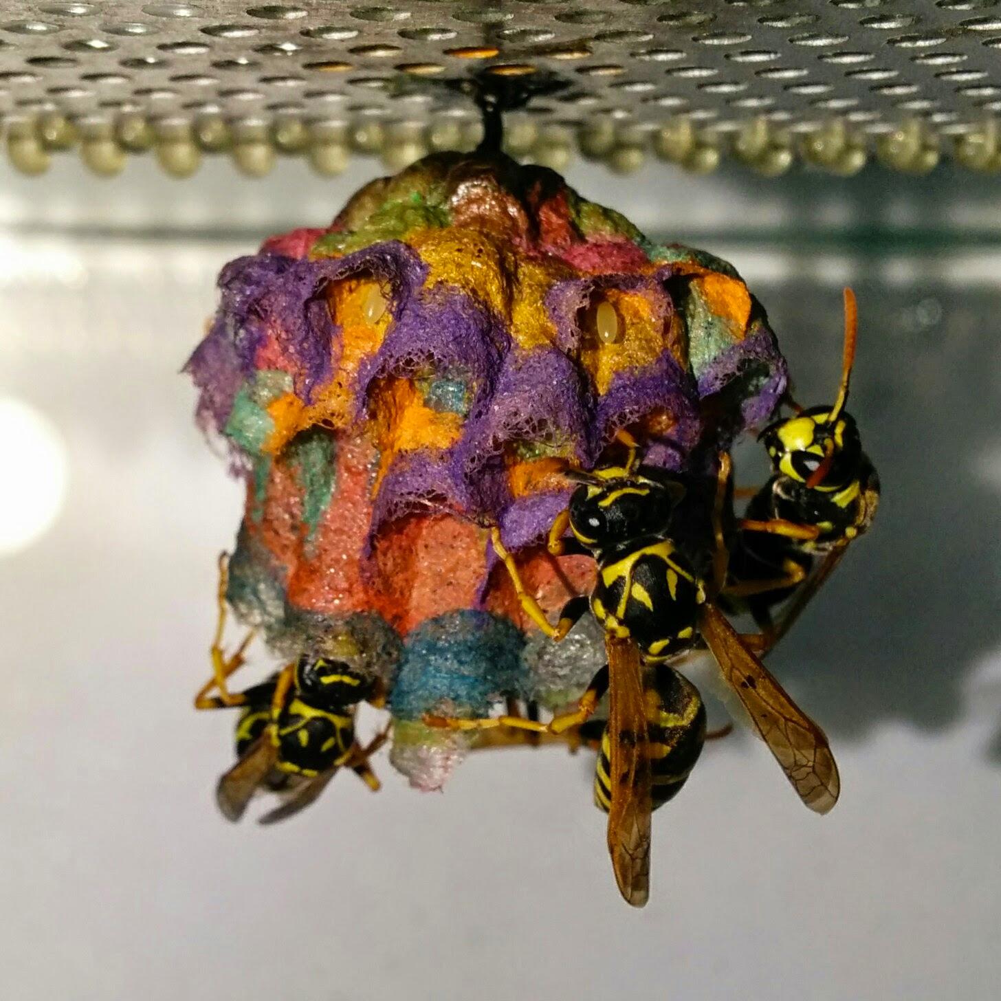 nido-vespe-colorato-carta-mattia-menchetti-2