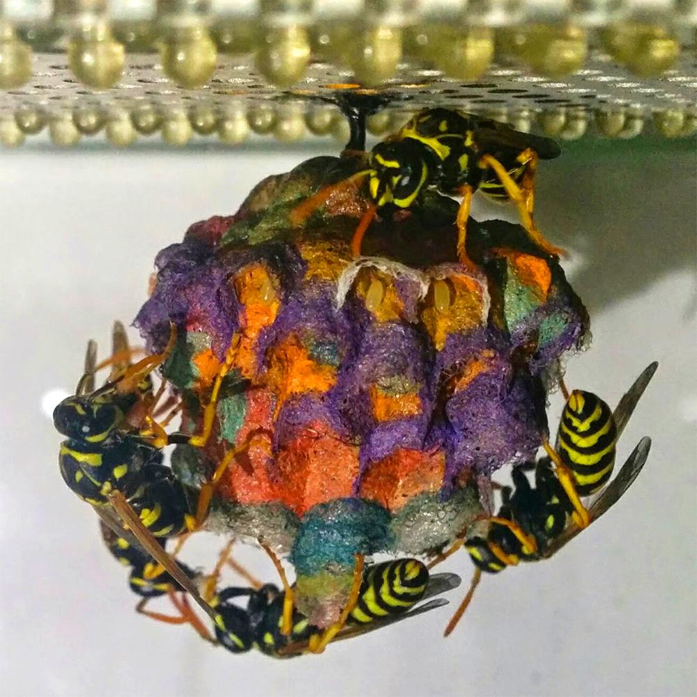 nido-vespe-colorato-carta-mattia-menchetti-3