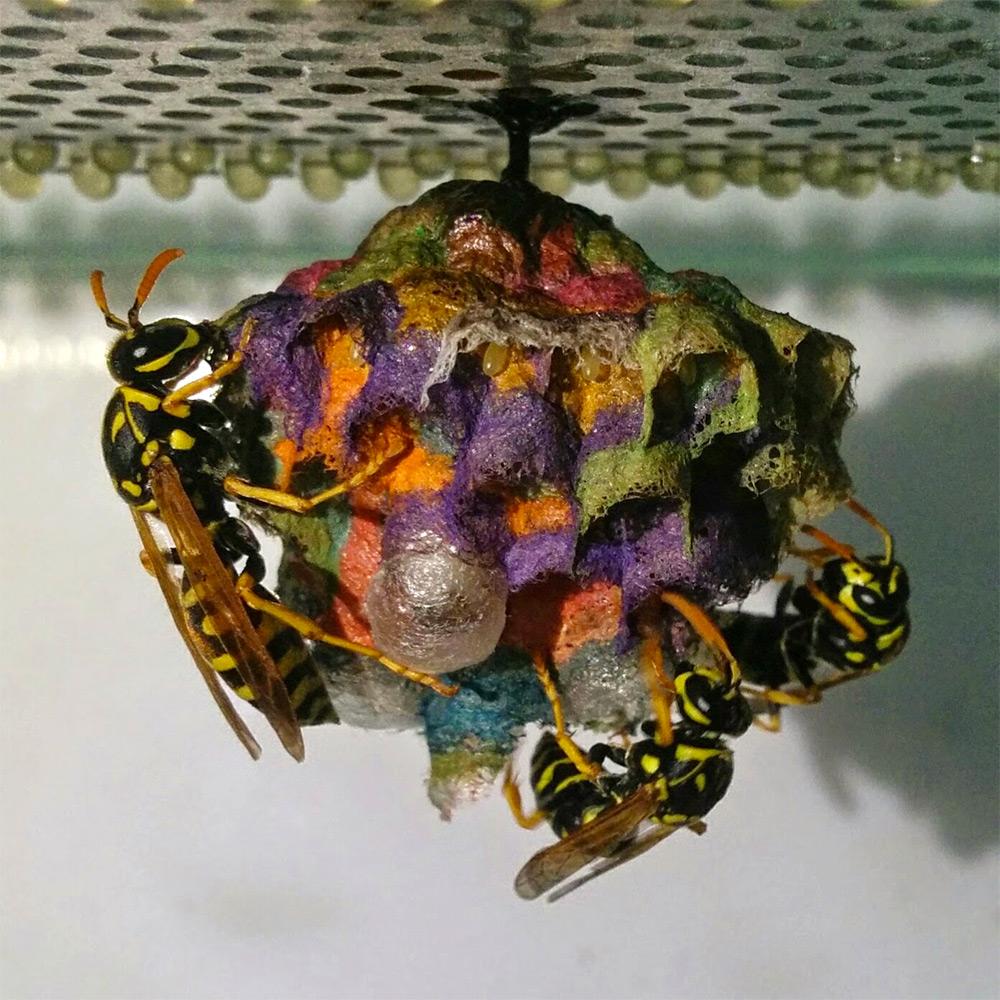 nido-vespe-colorato-carta-mattia-menchetti-4