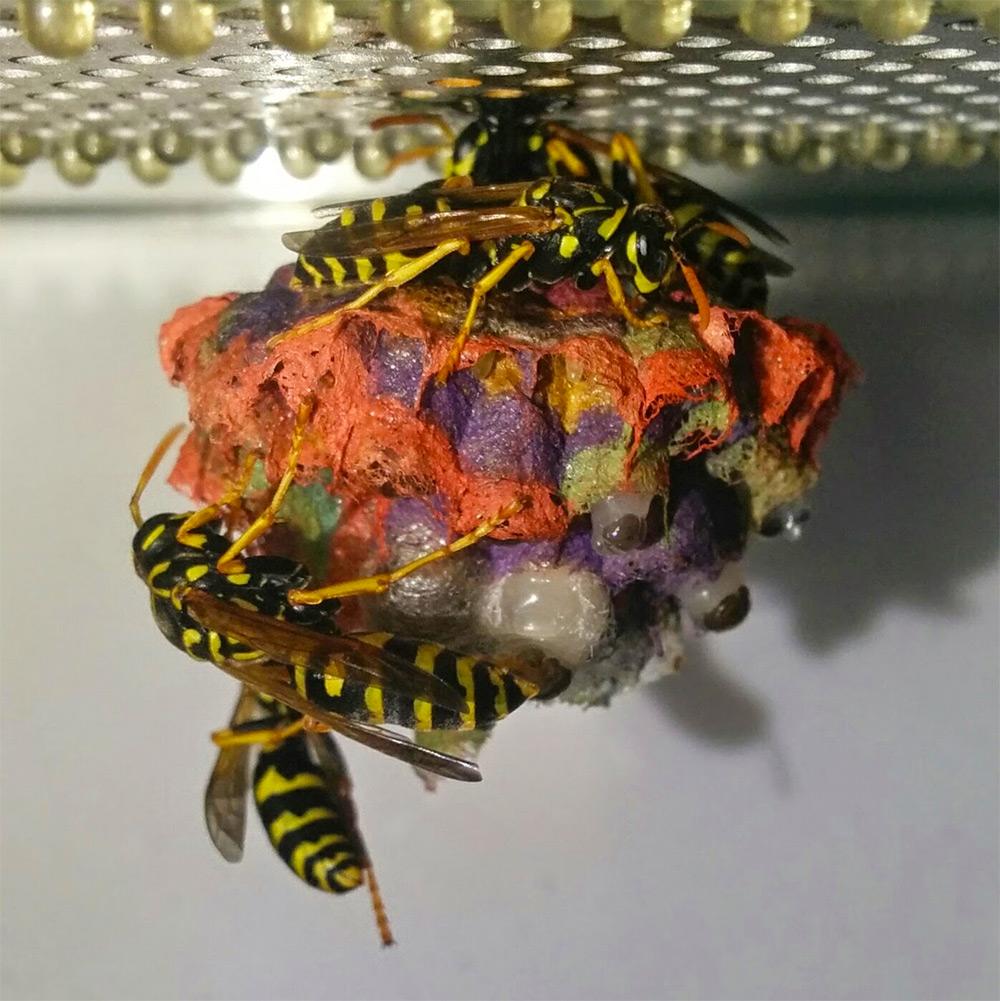 nido-vespe-colorato-carta-mattia-menchetti-5