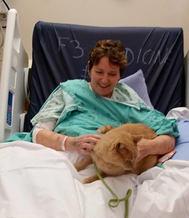 pet-therapy-ospedale-permette-ingresso-cani-gatti-animali-3