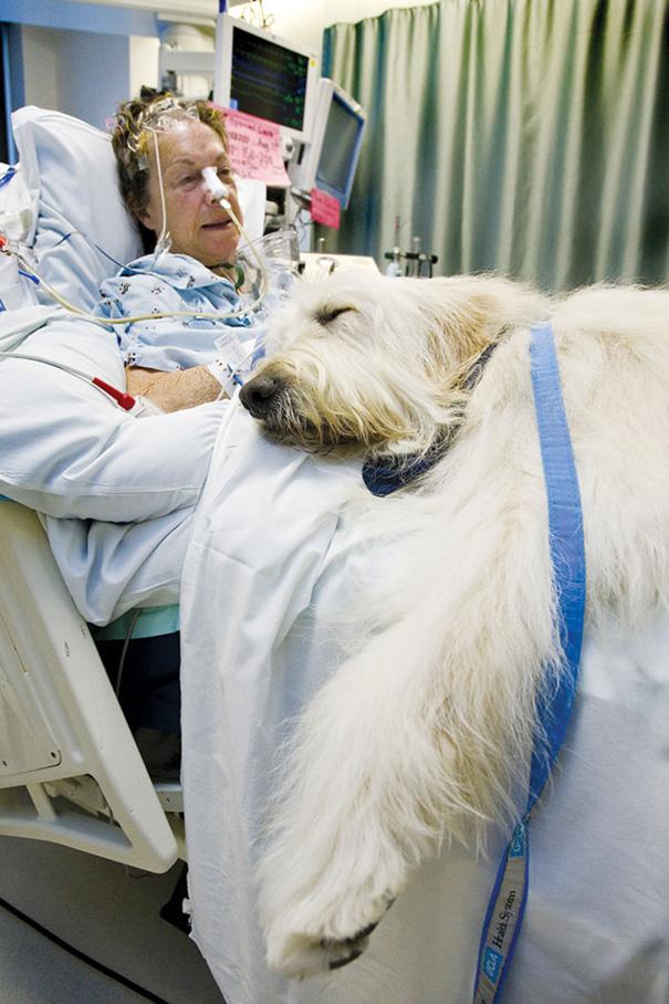 pet-therapy-ospedale-permette-ingresso-cani-gatti-animali-7