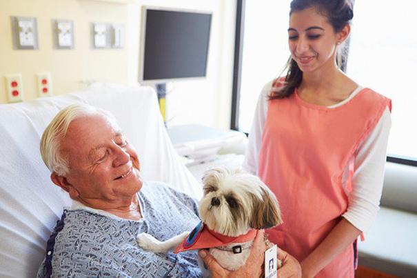 pet-therapy-ospedale-permette-ingresso-cani-gatti-animali-8