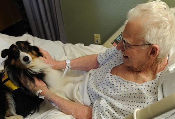 pet-therapy-ospedale-permette-ingresso-cani-gatti-animali-9