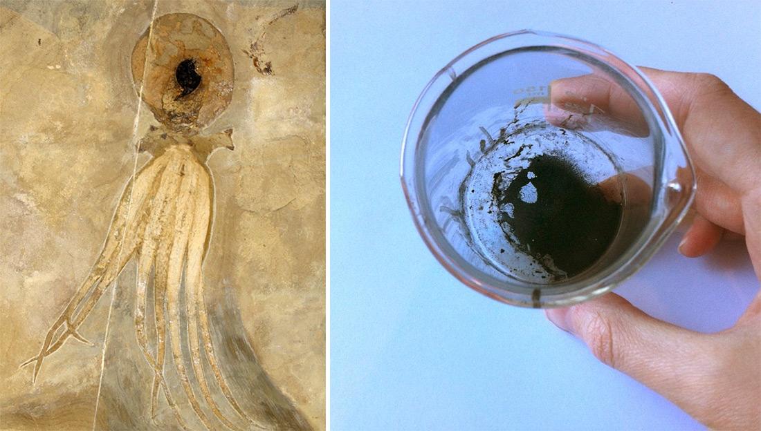 disegno-polipo-preistorico-fossile-inchiostro-sacca-esther-van-hulsen-3