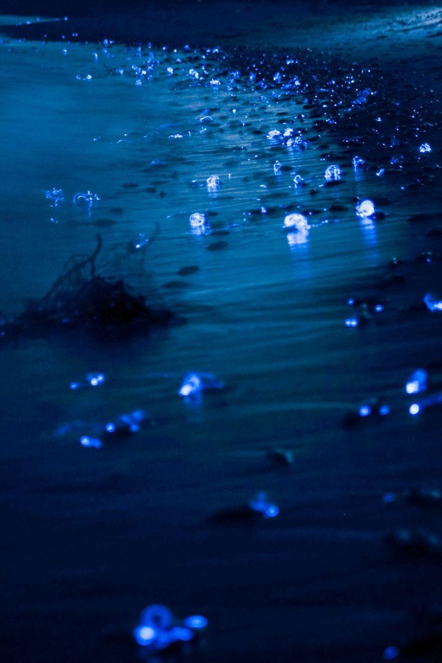 foto-calamari-bioluminescente-mare-giappone-ken-ohki-1