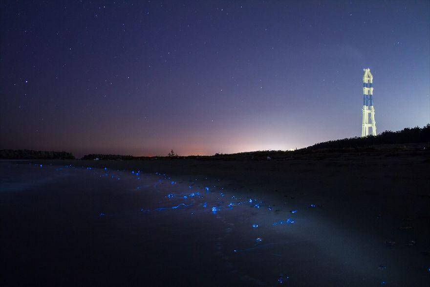 foto-calamari-bioluminescente-mare-giappone-ken-ohki-2
