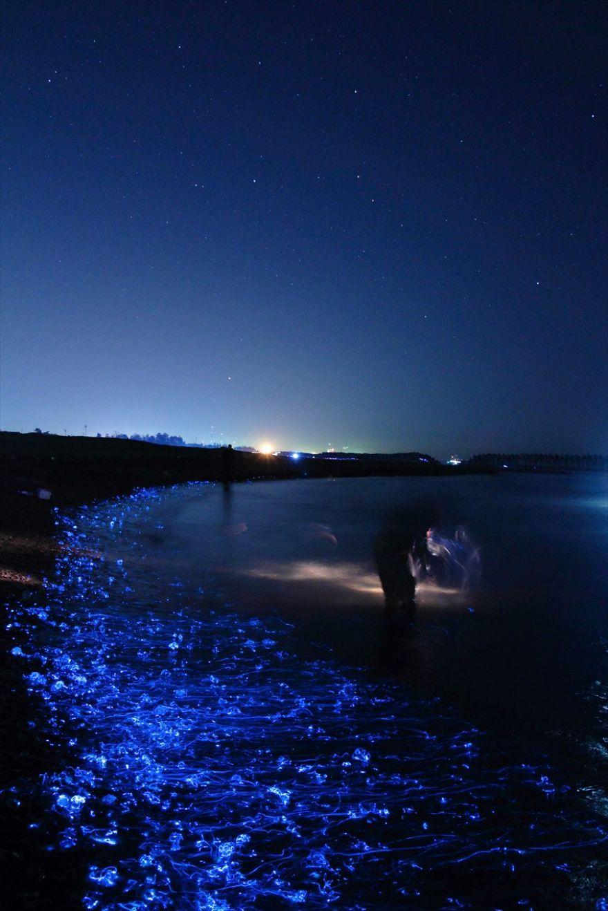 foto-calamari-bioluminescente-mare-giappone-ken-ohki-4