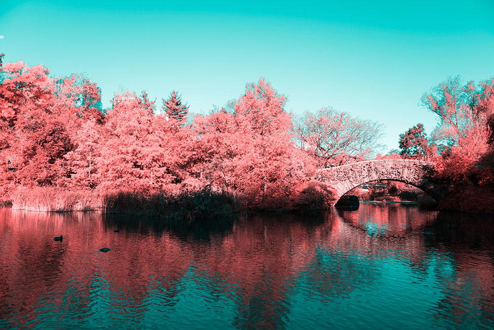 fotografia-infrarossi-central-park-new-york-paolo-pettigiani-3