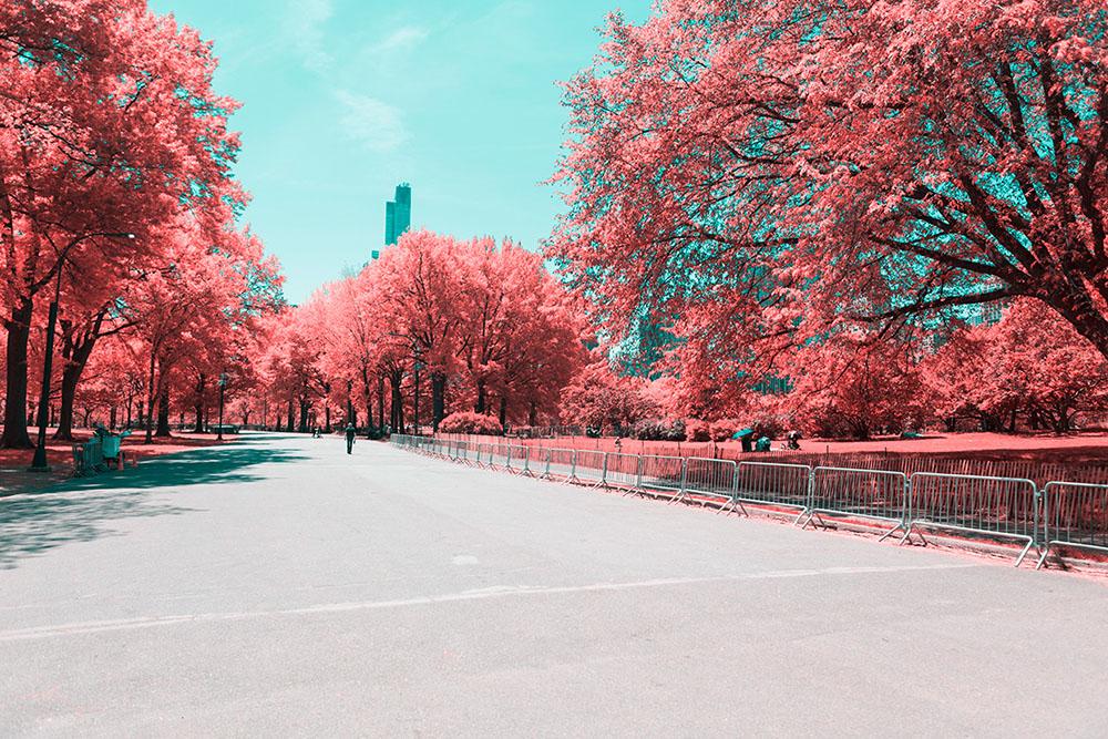 fotografia-infrarossi-central-park-new-york-paolo-pettigiani-5