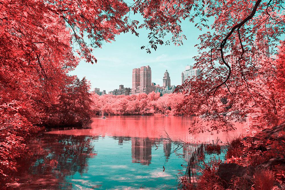 fotografia-infrarossi-central-park-new-york-paolo-pettigiani-6